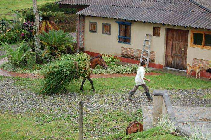 La Serrana Eco Farm and Hostel, Salento, Colombia, most trusted travel booking site in Salento