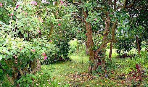 Hana Maui Botanical Gardens BnB - Search available rooms and beds for hostel and hotel reservations in Hana 16 photos
