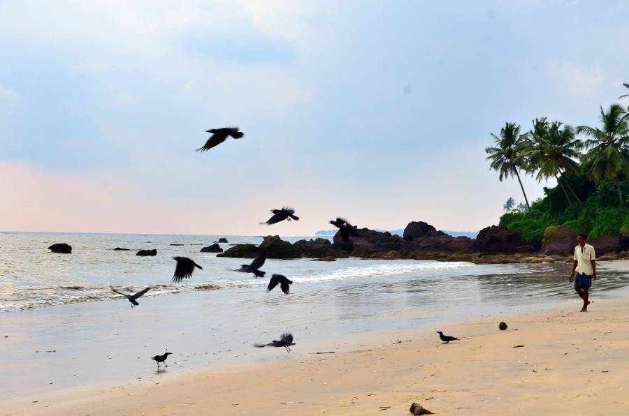 Ocean Green Home Stay, Cannanore, India, relaxing hostels and backpackers in Cannanore