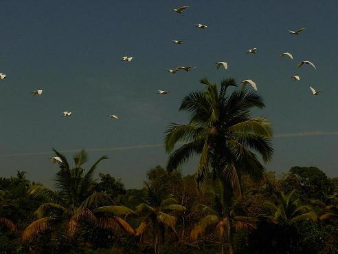 Om Lake Resort, Goa, India, India hostels and hotels
