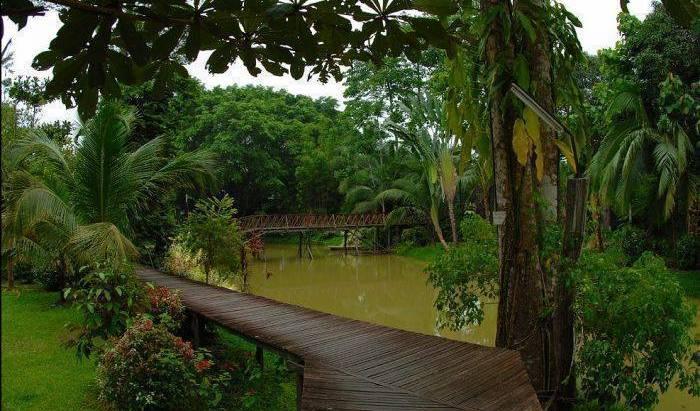 Sepilok Jungle Resort -  Sandakan 14 photos