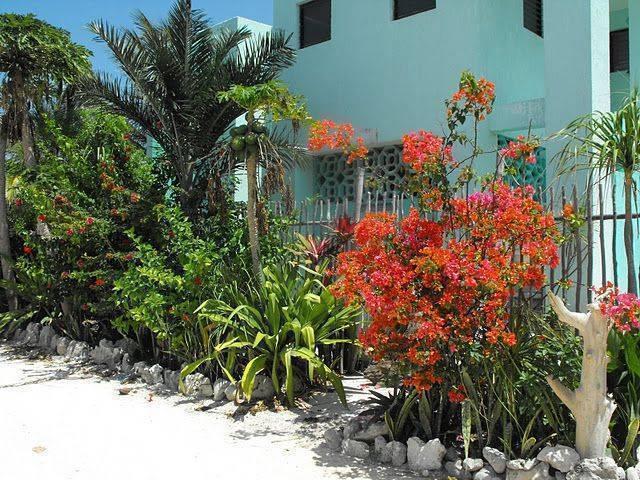 Casa de Suenos, Xcalak, Mexico, Mexico 旅馆和酒店