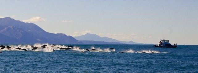 Austin Heights Bed and Breakfast, Kaikoura, New Zealand, holiday vacations, book a bed & breakfast in Kaikoura