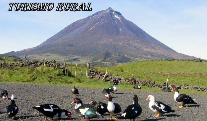 Casas do Canto - Search for free rooms and guaranteed low rates in Sao Roque do Pico 9 photos
