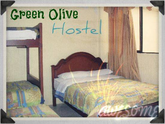 Olive Hostel, Bucharest, Romania, Romania hostels and hotels