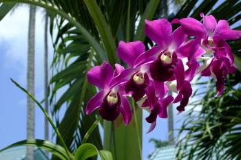 Paradise Zum Ross, Phuket, Thailand, great travel and bed & breakfasts in Phuket