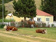 Estancia La Quinta, El Chalten, Argentina, best deals for hostels and backpackers in El Chalten