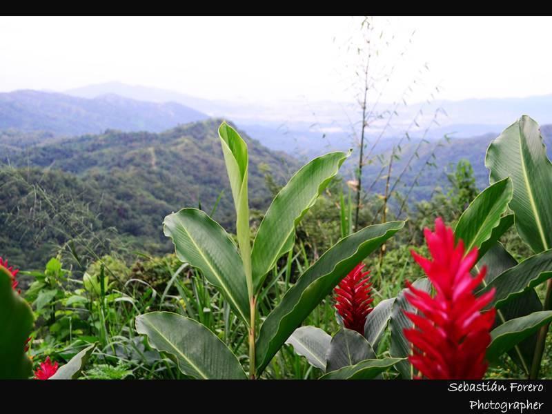 Rancho de la Luna, Minca, Santa Marta, Colombia, where to stay and live in a city in Santa Marta
