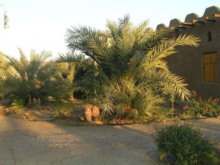 Desert Rose Eco Lodge, Badahl, Egypt, best bed & breakfasts for parties in Badahl