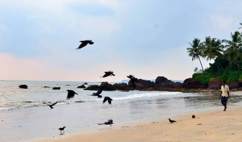 Ocean Green Kerala - Search available rooms and beds for hostel and hotel reservations in Cannanore 2 photos