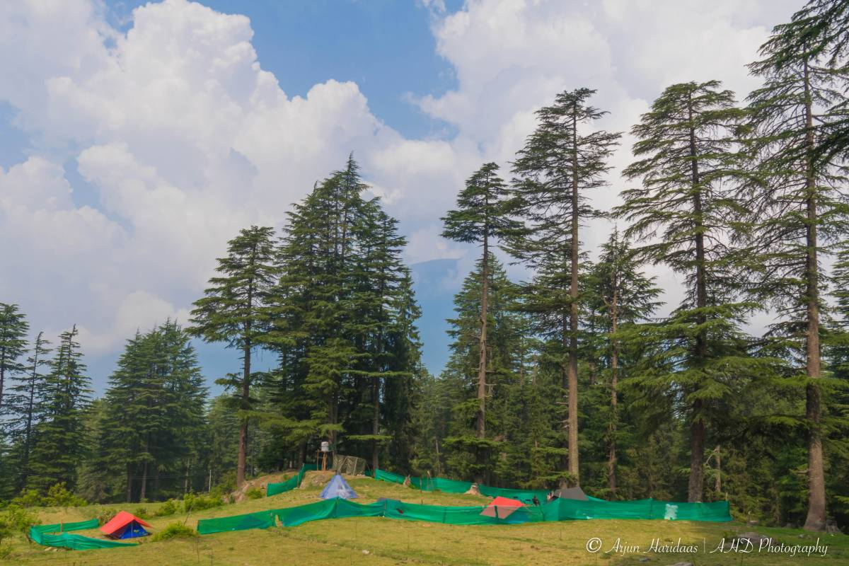 Travelosic Forest Campsite, Manali, India, India bed and breakfasts and hotels