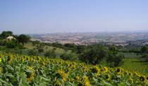 Il Sorger Del Sole -  Cingoli, Marche (The Marches), Italy bed and breakfasts and hotels 32 photos