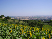 Il Sorger Del Sole, Cingoli, Italy, Italy bed and breakfasts and hotels