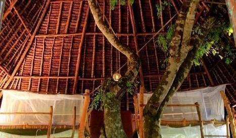 Distant Relatives Ecolodge Backpackers - Get cheap hostel rates and check availability in Kilifi 29 photos