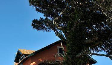The House of the She Pine Tree - Get cheap hostel rates and check availability in Sintra 14 photos